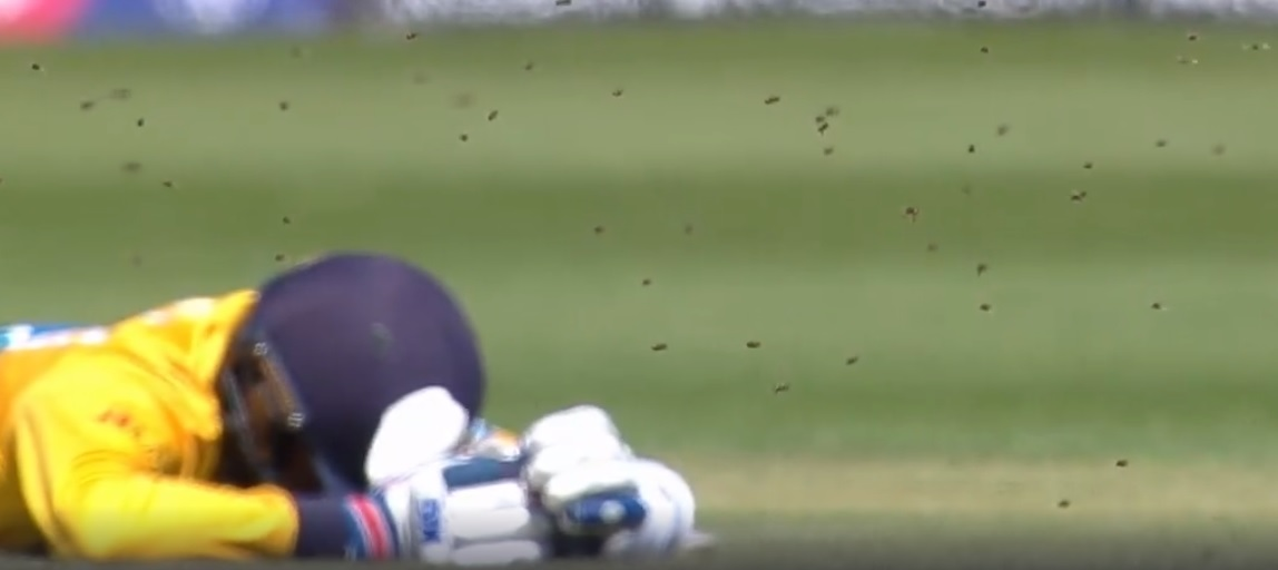 WATCH: Players bow down as a swarm of bees interrupt Sri Lanka vs South Africa 2019 Cricket World Cup match