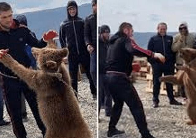 Khabib Nurmagomedov News: PETA send a complaint to UFC after a video of the Lighweight Champion wrestling a bear emerges