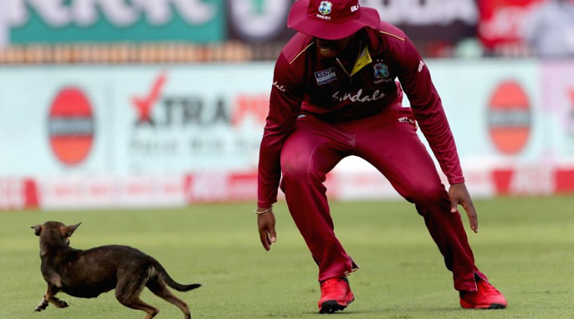India vs West Indies Stray Dog invades ground and brings play to a halt