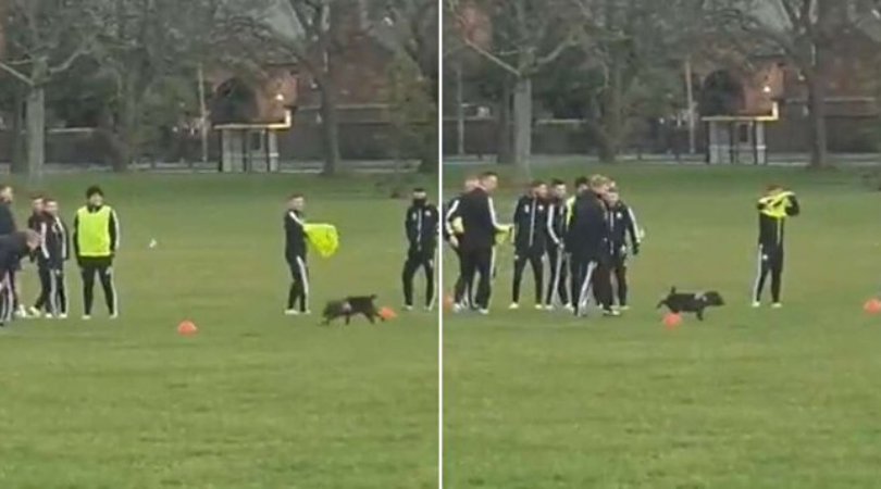 Dog interrupts Sheffield United's training session by urinating on a cone ahead of match against Liverpool