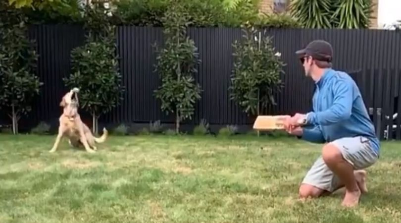 WATCH: Kane Williamson's dog grabs clean catch at slip to rule the internet