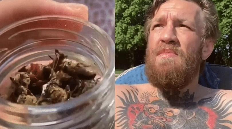 Watch Conor McGregor eats dead bees for breakfast
