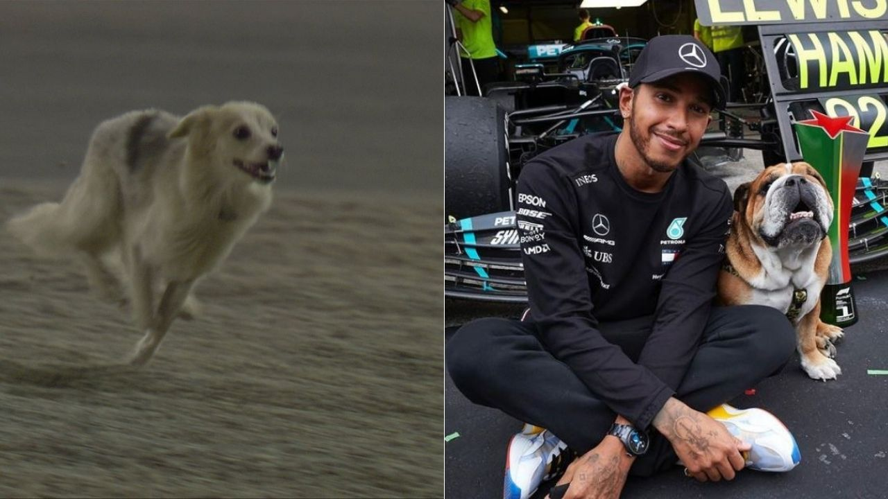 """I hope it's not Roscoe.""- Lewis Hamilton jokes after a dog disrupts FP2 in Bahrain"