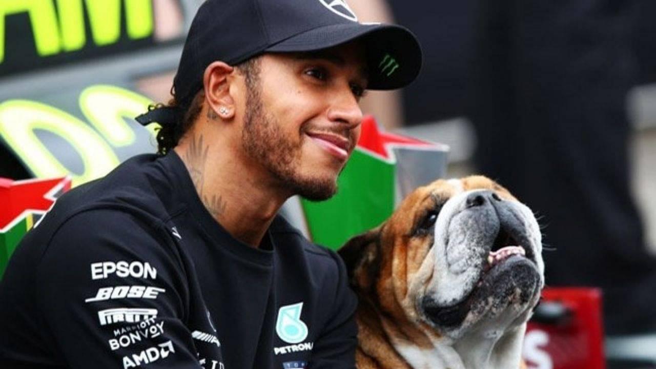 """I loves beings a vegans"" - Lewis Hamilton's dog Roscoe eating vegan food raises social media storm"