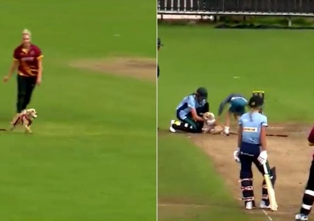 Dog pitch invader cricket: Dog enters ground and grabs ball in hilarious video from Women's All-Ireland T20